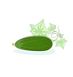 Cucumber isolated on white background vector
