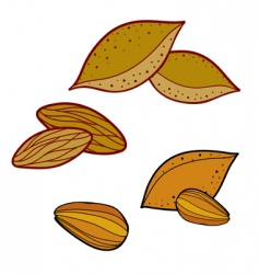 almond illustration vector image vector image