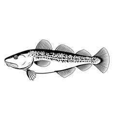 atlantic cod black and white fish vector image