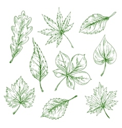 Green sketched leaves of forest and garden trees vector