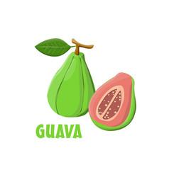 Logo guava farm design vector