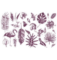 Hand drawn tropical leaves flowers and flamingo vector