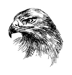 Hand sketch eagle head vector