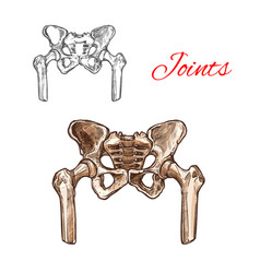 sketch icon of human pelvis bones or joints vector image