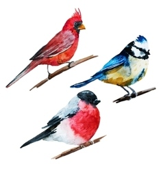 Watercolor birds vector image