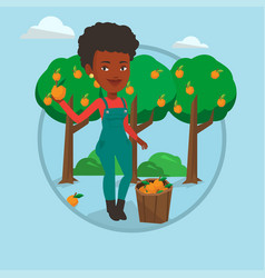 farmer collecting oranges vector image