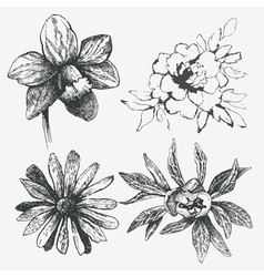 Set of flower vector