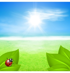 Sunny background with green grass and ladybird vector