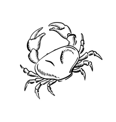 Marine crab with big claws sketch vector
