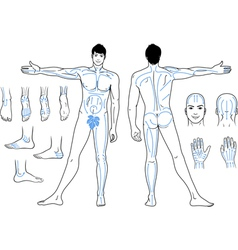Full length front back views of a standing man vector image vector image