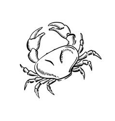Marine crab with big claws sketch vector image vector image