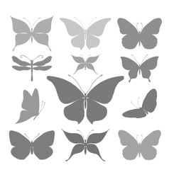 Butterflies graphic silhouettes vector