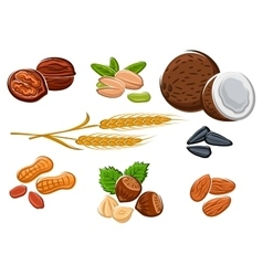 Nuts sunflower seeds and wheat ears vector