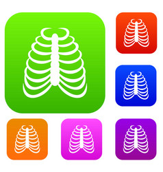rib cage set collection vector image vector image