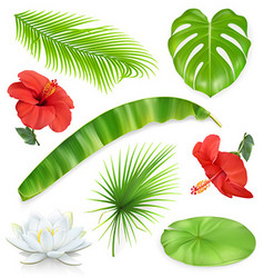 Jungle Set of leaves and flowers Tropical plants vector image vector image