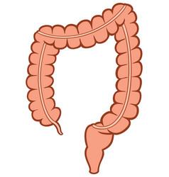 Human large intestine vector