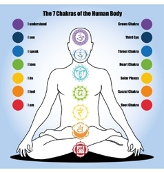 seven chakras of the Human body vector image