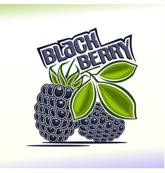 blackberry still life vector image vector image