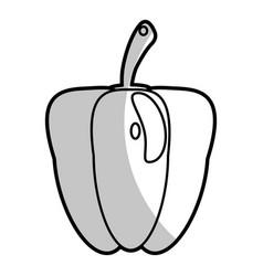 pepper nutrition food - shadow vector image vector image