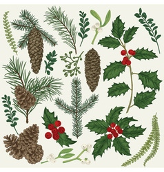 Set with christmas plants botanical branch vector