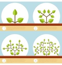 Dichotomous branching plants banner vector