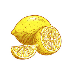Lemon fruits sliced sketch icon vector