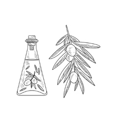 Olive Oil In Glass Bottle And Branch Hand Drawn vector image