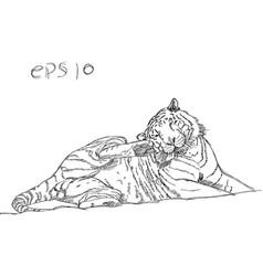 tiger doodle line vector image