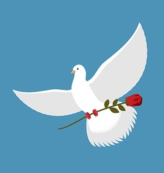 White dove and red rose Beautiful bird carries red vector image vector image