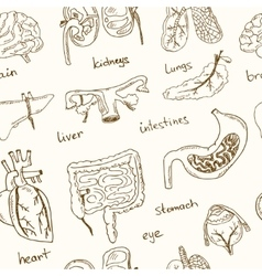 Human internals doodle seamless pattern Vintage vector image