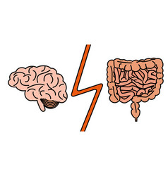 Gut versus brain concept vector