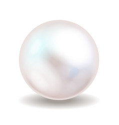 White pearl Sea pearl isolated on white vector image vector image