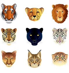 Big cats heads set vector