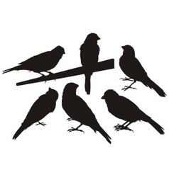 Canary bird silhouettes vector