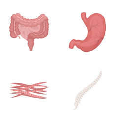 Intestines stomach muscles spine organs set vector