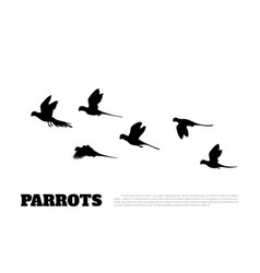Black silhouette of parrots on white background vector