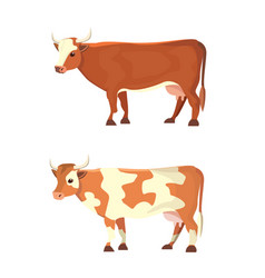 Set of different cows isolated colore vector