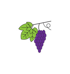 grapes line icon healthy fruit graphic vector image