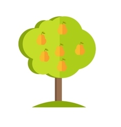 Pear tree in flat style design vector