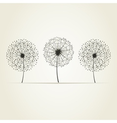 Three dandelions vector