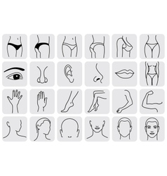 Body parts plastic face surgery vector