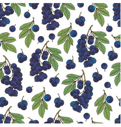 berries collection-05 vector image