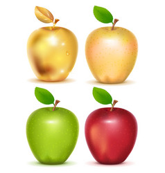 Set of red yellow green and gold apple on white vector