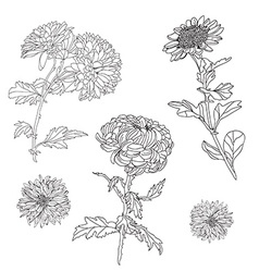 floral decorations set vector image