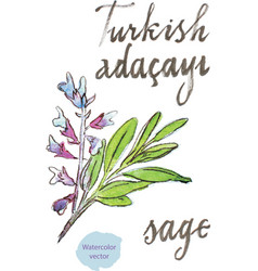 Watercolor sage vector