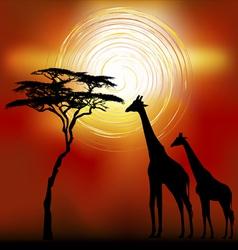 Kenya giraffes vector image