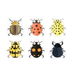 Insect icons ladybird set vector
