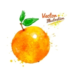 Watercolor orange vector
