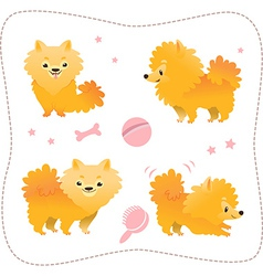 Set of spitz puppies vector image vector image