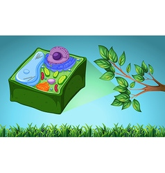Plant cell and green leaf vector image